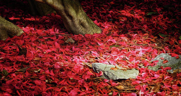 Photograph - Carpet Of Petals I by Cameron Wood
