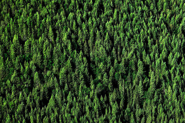 Photograph - Carpet Of Trees by Todd Klassy