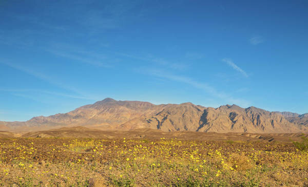 Death Valley Np Photograph - Carpet Of Wildflowers by Kunal Mehra
