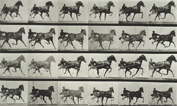 Carriage Photograph - Carriage Driving by Eadweard Muybridge