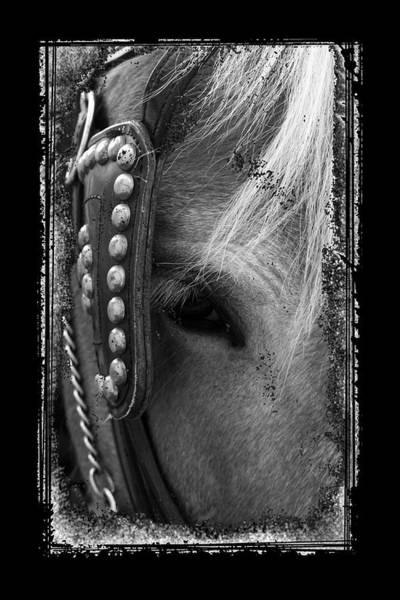 Carriage Horse B And W Art Print