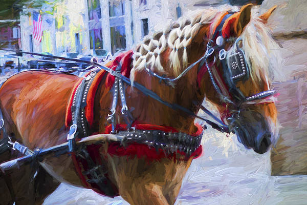 Photograph - Carriage Horse - Y1 by Carlos Diaz