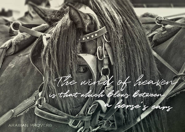 Carriage Horse Quote Art Print