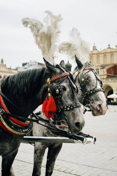 Wall Art - Photograph - Carriage Horses by Pati Photography