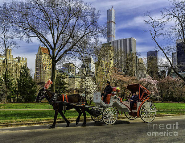 Photograph - Carriage Ride In Central Park by Nick Zelinsky