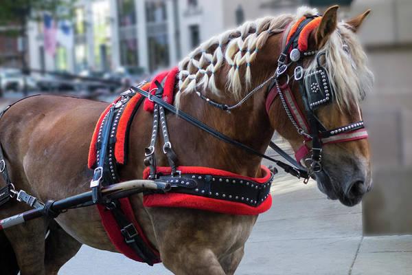 Photograph - Carriage Ride Y1 by Carlos Diaz