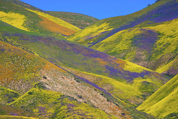 Photograph - Carrizo's Wildflower Tapestry Superbloom 2017 by Lynn Bauer