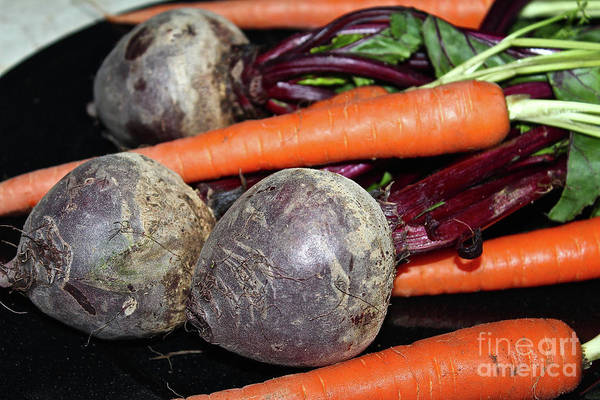 Photograph - Carrots And Beets by Ann E Robson