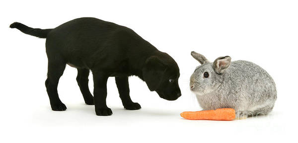 Photograph - Carrots Are For Pups, Too by Warren Photographic