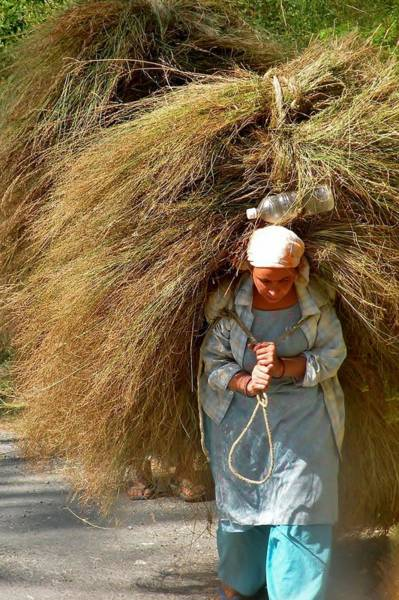 Photograph - Carrying The Hay by Kim Bemis