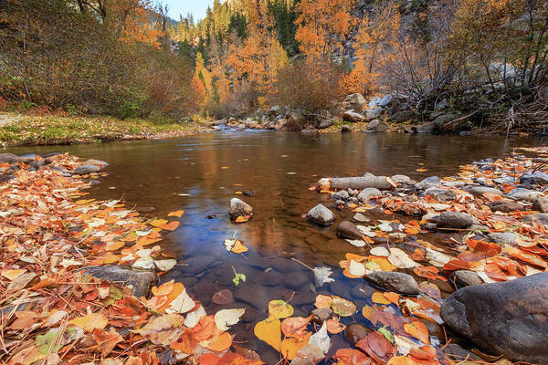 Wall Art - Photograph - Carson River Autumn Collection by Mike Herron