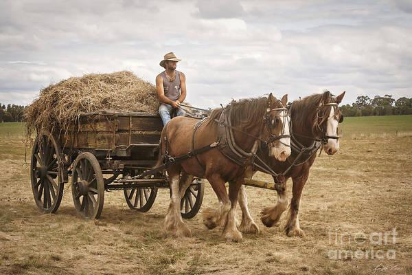 Plow Horses Photograph - Carting Hay by Linda Lees