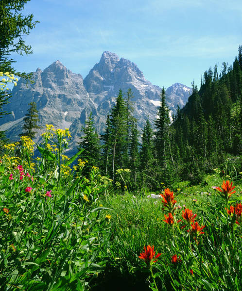 Photograph - 1m9372-v-cascade Canyon And The Tetons  by Ed  Cooper Photography