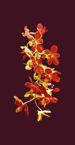 Photograph - Cascade Of Orange Orchids by Susan Savad