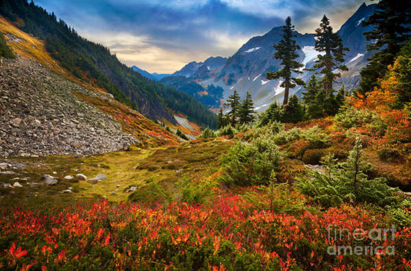 Conifer Photograph - Cascade Pass Fall by Inge Johnsson