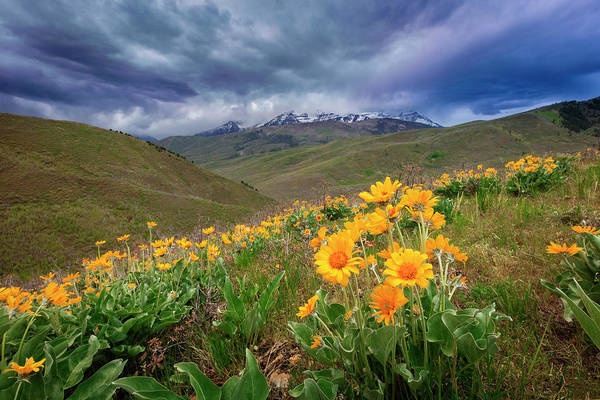 Photograph - Cascade Springs Golden Wildflowers by Johnny Adolphson