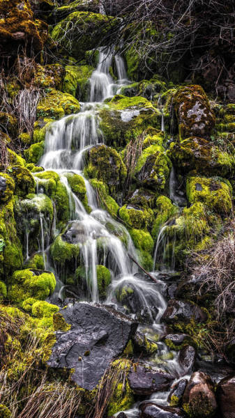 Photograph - Cascade Through The Moss by Wes and Dotty Weber