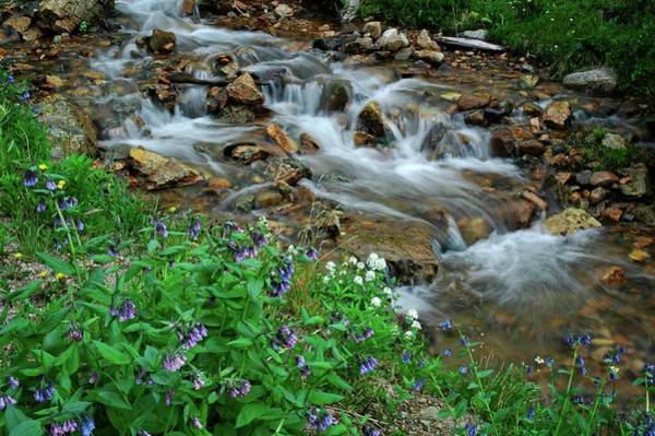 Photograph - Cascades And Wildflowers In Loveland Pass by Lynn Bauer