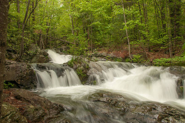 Photograph - Cascades On The Brooks Falls Trail by Brenda Jacobs