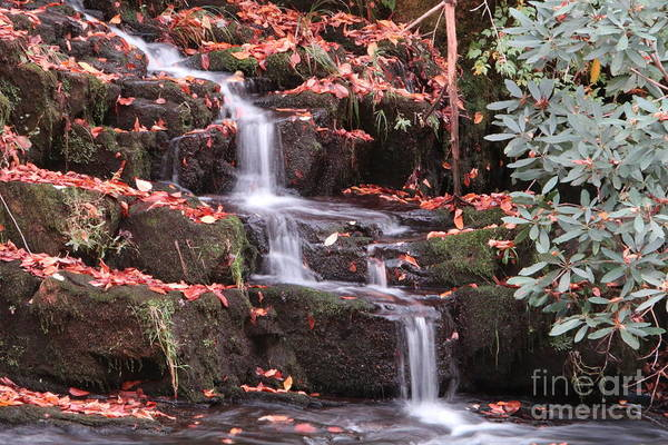 Photograph - Cascading Falls by Tom Claud