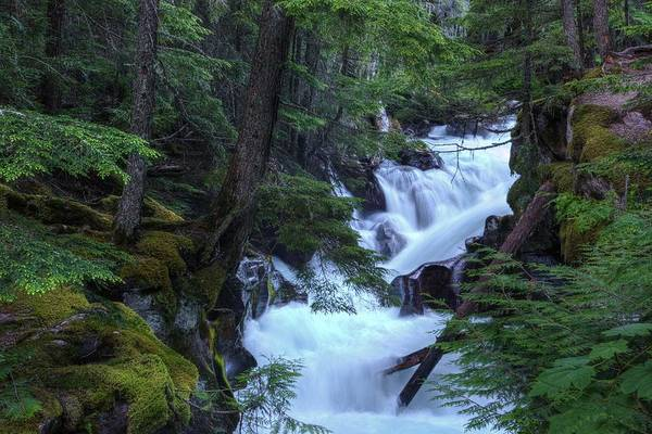 Photograph - Cascading Forest Creek by David Andersen