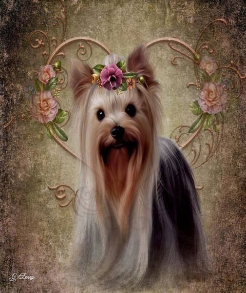 Yorkie Wall Art - Photograph - Casey by G Berry