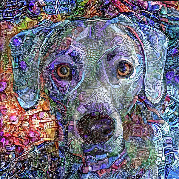 Mixed Media - Cash The Blue Lacy Dog Closeup by Peggy Collins