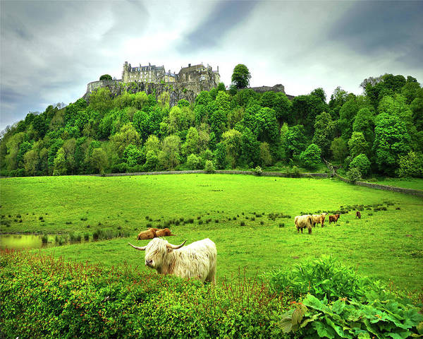 Castles Of Scotland Digital Art - Castle And The Coo by Vicki Lea Eggen