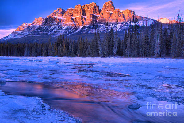 Photograph - Castle Mountain Purple Refelctions by Adam Jewell