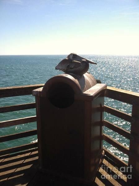 Encounter Bay Photograph - Casual Pelican by Megan Thompson