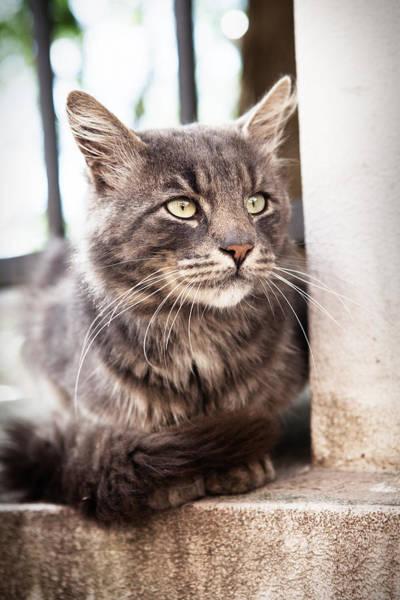 Photograph - Cat #2480 by Andrey  Godyaykin