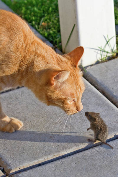 Photograph - Cat And Mouse by Wesley Aston