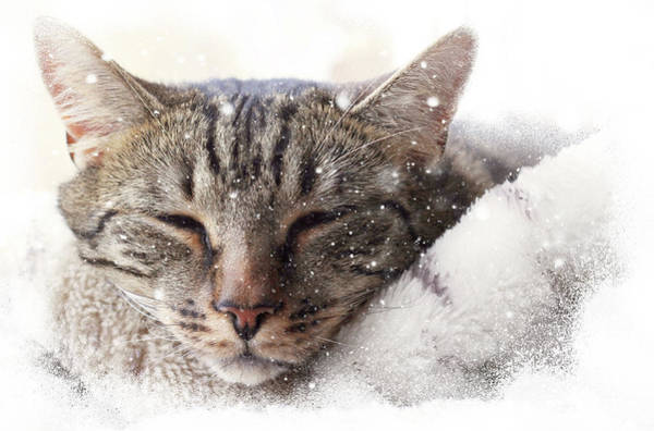 Photograph - Cat And Snow by Helga Novelli
