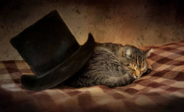 Photograph - Cat And The Hat by Robin-Lee Vieira