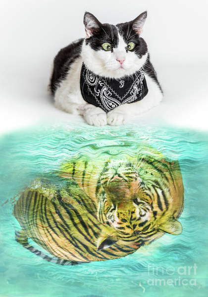 Digital Art - Cat And Tiger by Benny Marty