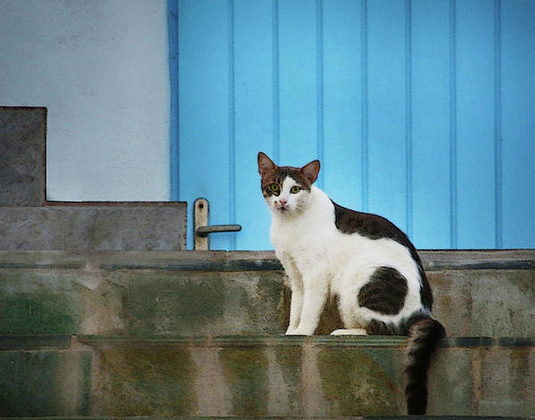 Photograph - Cat At Mykonos by Coleman Mattingly