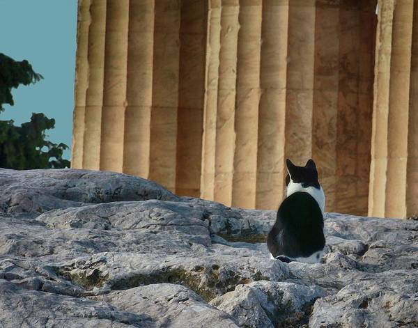 Photograph - Cat At Parthenon, by Coleman Mattingly