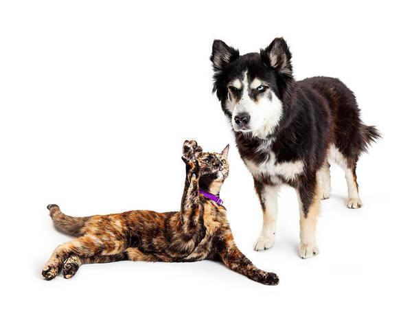 Alaskan Photograph - Cat Batting At Angry Dog by Susan Schmitz
