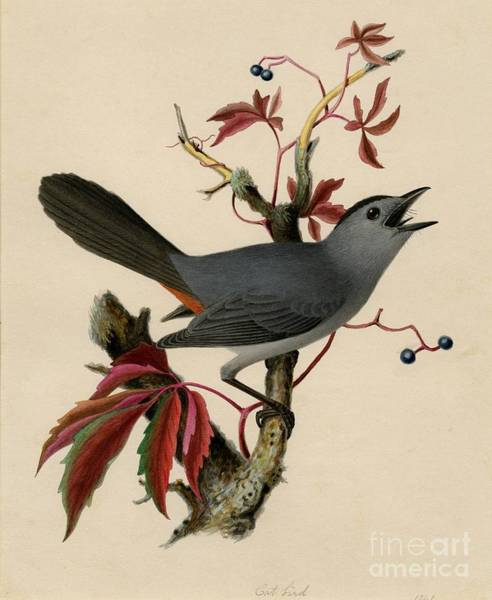 Painting - Cat Bird by Celestial Images