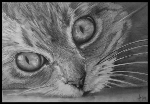 Wall Art - Drawing - Cat Eyes by Alycia Ryan