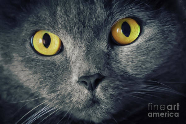Digital Art - Cat Eyes by Angela Doelling AD DESIGN Photo and PhotoArt