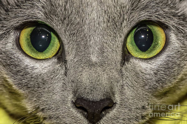 Carthusian Photograph - Cat Eyes by Benny Marty