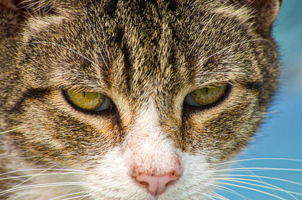 Photograph - Cat Eyes by Willard Killough III