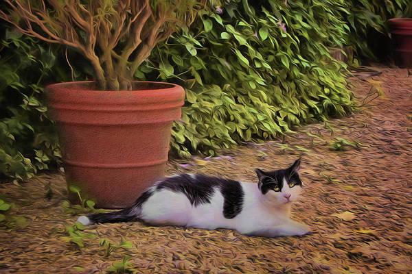 Wall Art - Photograph - Cat - Garden by Nikolyn McDonald
