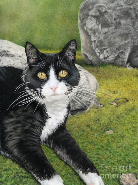 Wall Art - Painting - Cat In A Rock Garden by Sarah Batalka