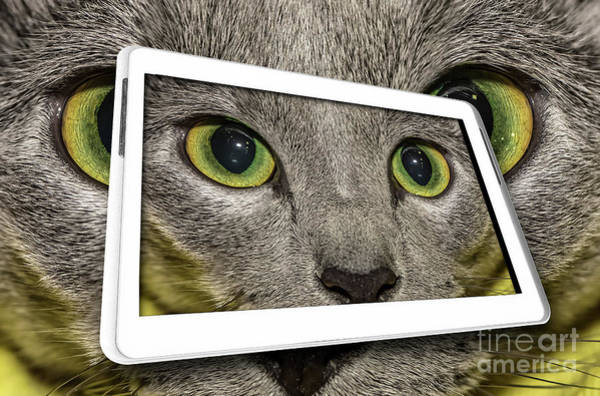 Carthusian Photograph - Cat In Tablet by Benny Marty