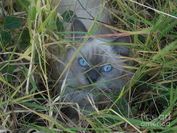 Evie Photograph - Cat In The Grass by Evie Hanlon