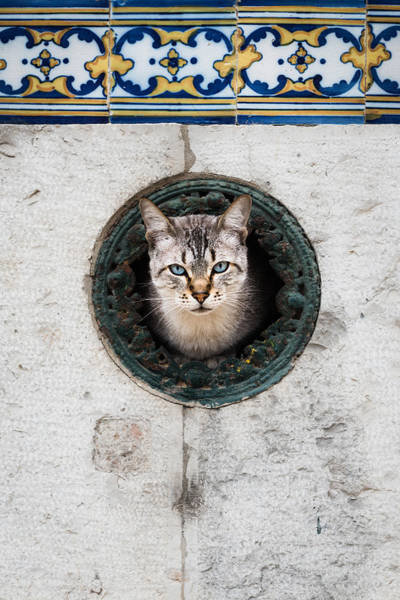 Sneak Photograph - Cat In The Wall I by Marco Oliveira