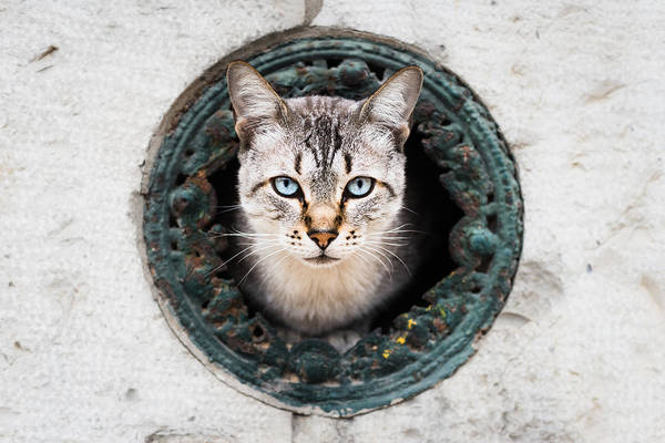 Sneak Photograph - Cat In The Wall II by Marco Oliveira