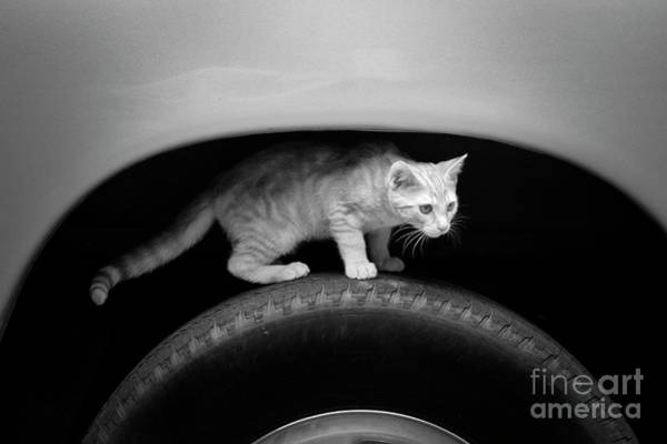 Photograph - Cat In The Wheel Well by Patrick M Lynch